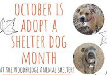 ShelterMonth