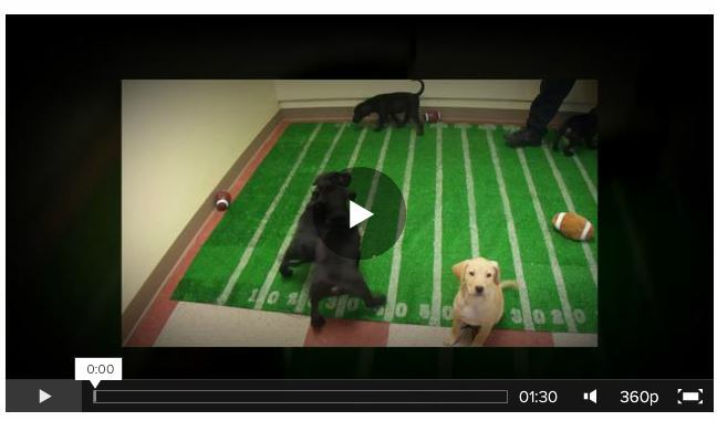 Screenshot of video of Puppy Bowl 2014